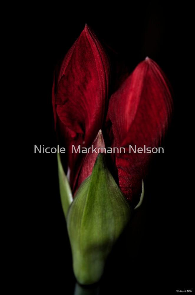 Amaryllis Heart by Nicole  Markmann Nelson