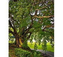 Bodhi Tree Photographic Print