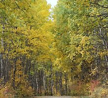 Autumn Road by Kathi Huff
