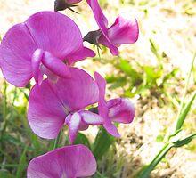 WILD Pink by edytaart