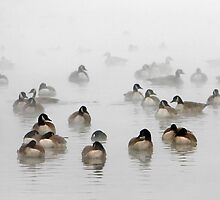 Canadian Geese on Foggy Pond by Tobin Rogers