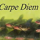 Carpe Diem by Joni  Rae
