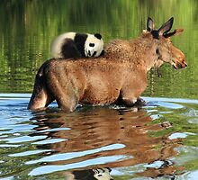 Taking a Ride on the Panda, err, um, Moose Express by GolemAura