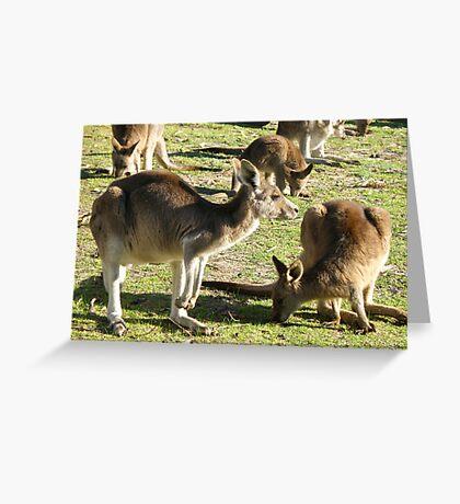Aussie Roos Greeting Card