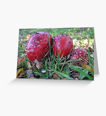 Lovely to photograph, delightful to behold, but eat it and you will never grow old. Greeting Card