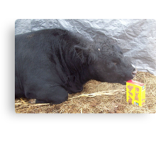 Calf Proof Packaging Metal Print