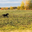 Almost All Horses 2016 by Kathi Arnell