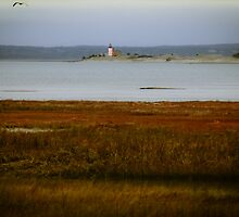 Sandy Neck Lighthouse by Elizabeth Thomas