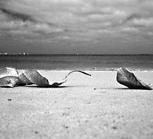Three Leaves  by Pene Stevens