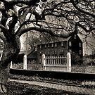 Beyond Gnarled Tree by Carrie Blackwood