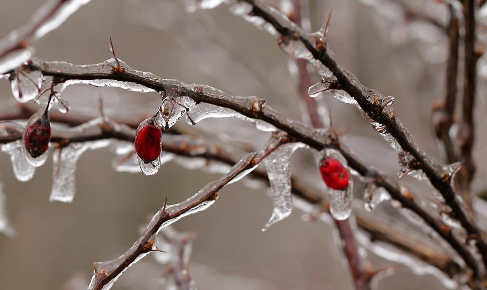 Ice Berries by Lynn Gedeon