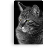 Green Eyed Tabby Cat Canvas Print