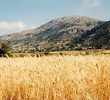 Cereal Field - Lasithi by Francis Drake
