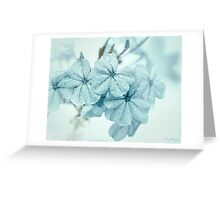 Plumbago is the language that my garden speaks in summer... Greeting Card