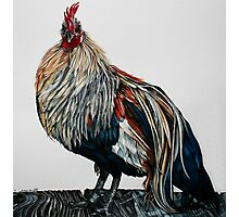 Rooster 2 Photographic Print