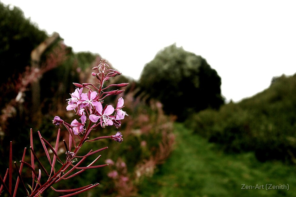 Pink by Zen-Art (Zenith)