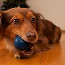 Dog and the blue ball by César Torres