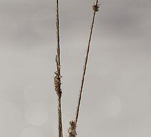 Frozen Twigs by Kathi Huff
