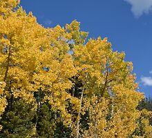 Southern Colorado Fall by naturescopes