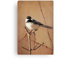 My Pretty Chickadee ~ Canvas Print