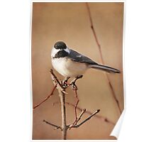 My Pretty Chickadee ~ Poster