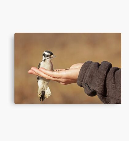The Brave Little Woodpecker ~ Canvas Print