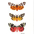 Tiger Moths by JamesAlden