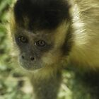 Very Sad Looking Monkey by Coemlyn