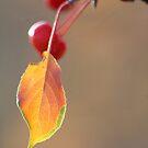 Leaf & Crabapples by Kathi Arnell