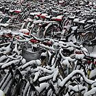 Sea of bicycles by Javimage