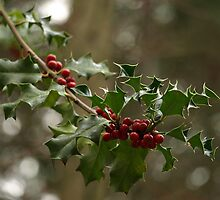 Wild Holly by Iselilja