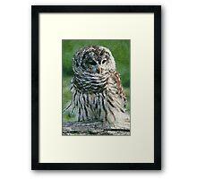 Barred Owl Print, Poster & Card Framed Print