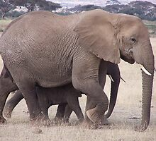 Elephant mother and young, Kenya by Martina Nicolls