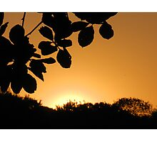 Sunset over the park Photographic Print