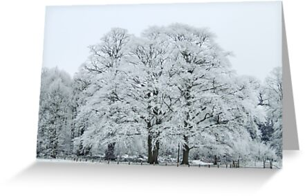 Frozen and Frosted Trees by John Dunbar