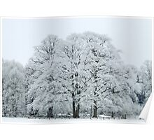 Frozen and Frosted Trees Poster