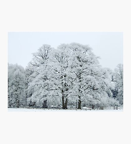 Frozen and Frosted Trees Photographic Print