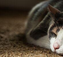 sleeping cat Sticker