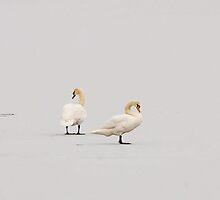 Swan Lake on Ice by MikeSquires