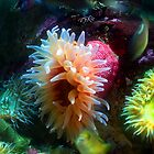 Sea Anemone by Lucy Adams