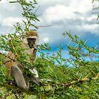 Monkey by JKutchera
