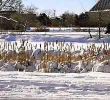 Reeds in the snow by Shulie1