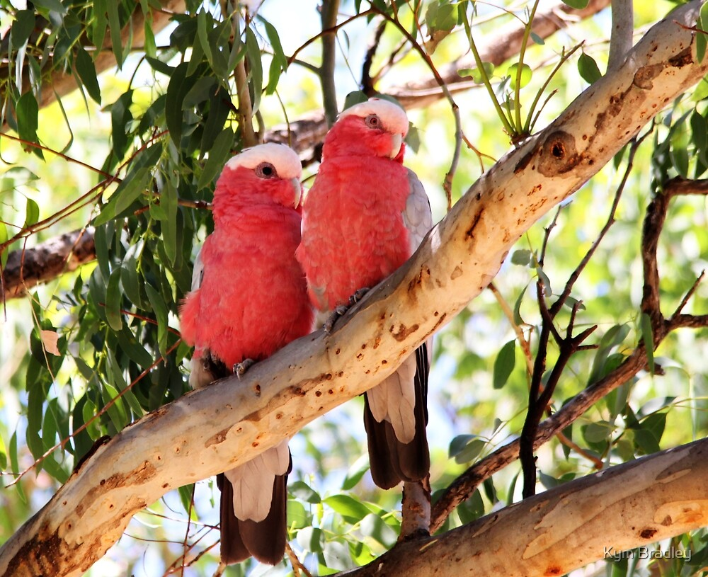 Pair of Galahs  by Kym Bradley
