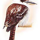 Kookaburra by ZiyaEris