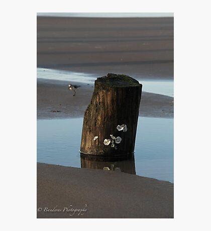 Top Sail Beach Photographic Print