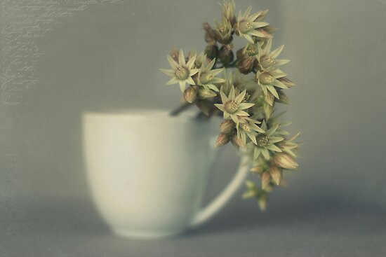 One cup of flower..... by Lynda Heins