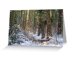 Calavera Redwoods Greeting Card