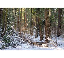 Calavera Redwoods Photographic Print