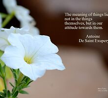 Meaning of Things by Maria P Urso