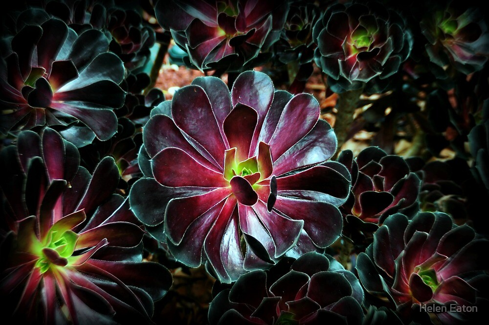 Bursts of Colour by Helen Eaton